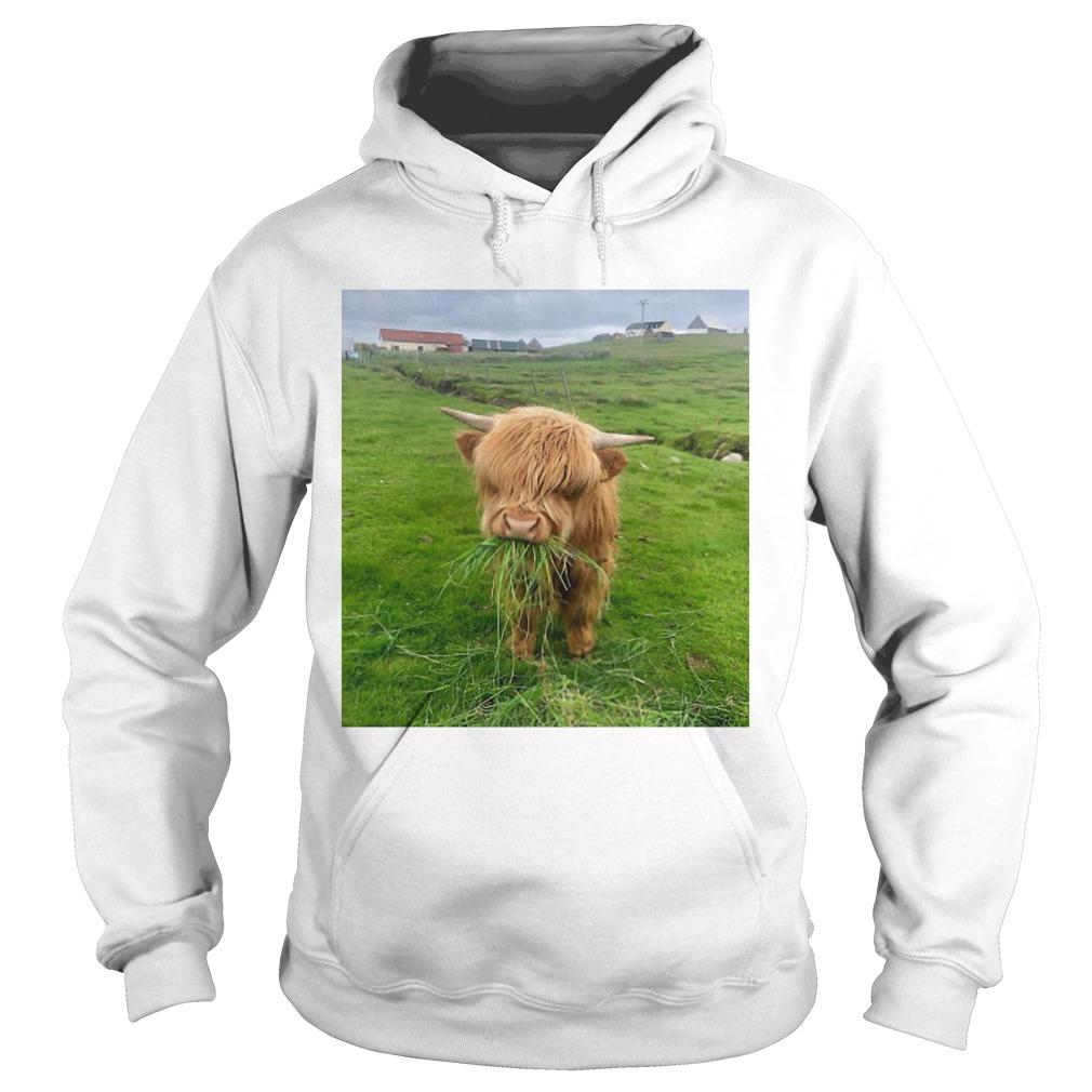 Cute Scottish Highland Cattle Hoodie